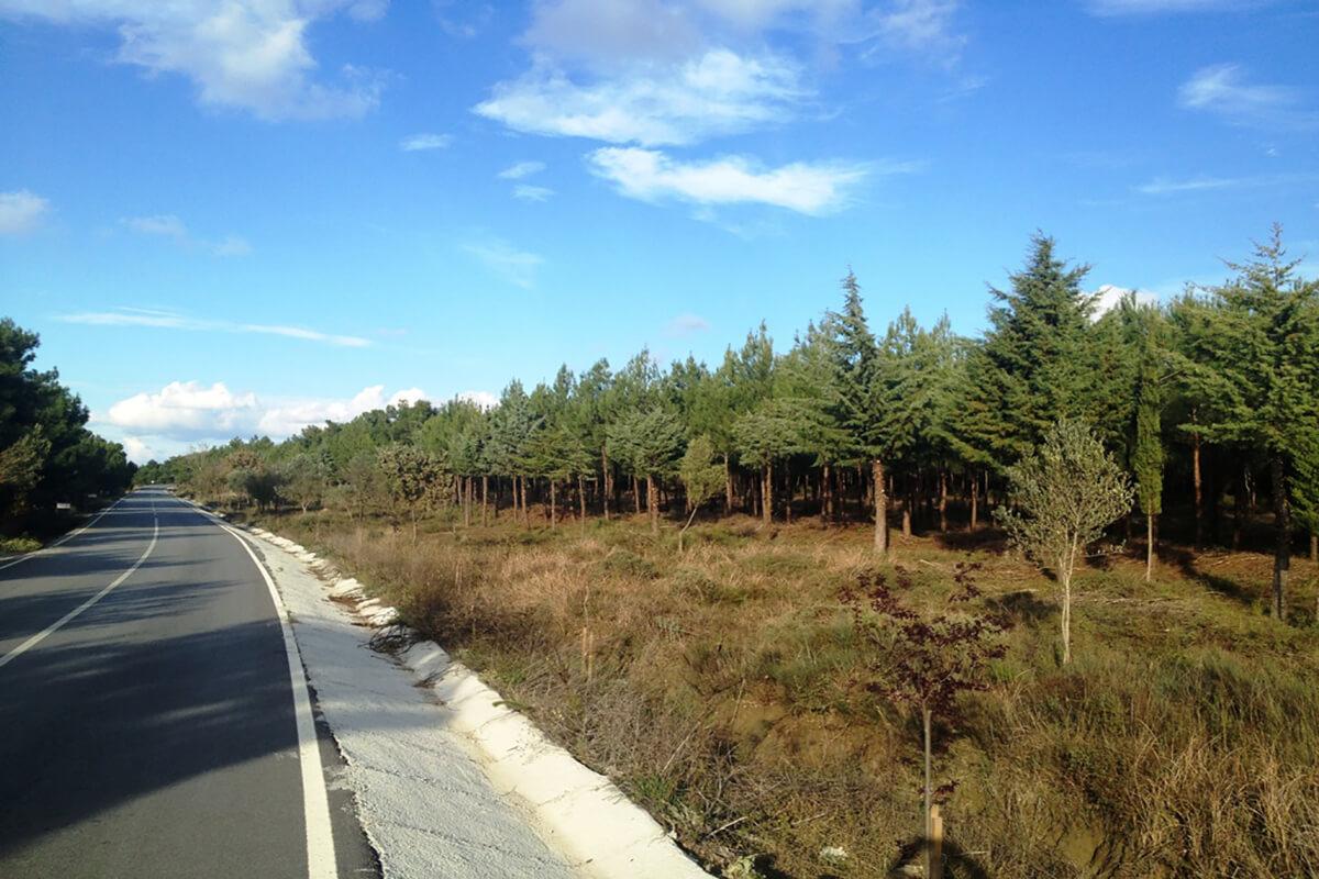 Orman Genel Müdürlüğü, Karayollarını Fidanlarla Yeşillendiriyor