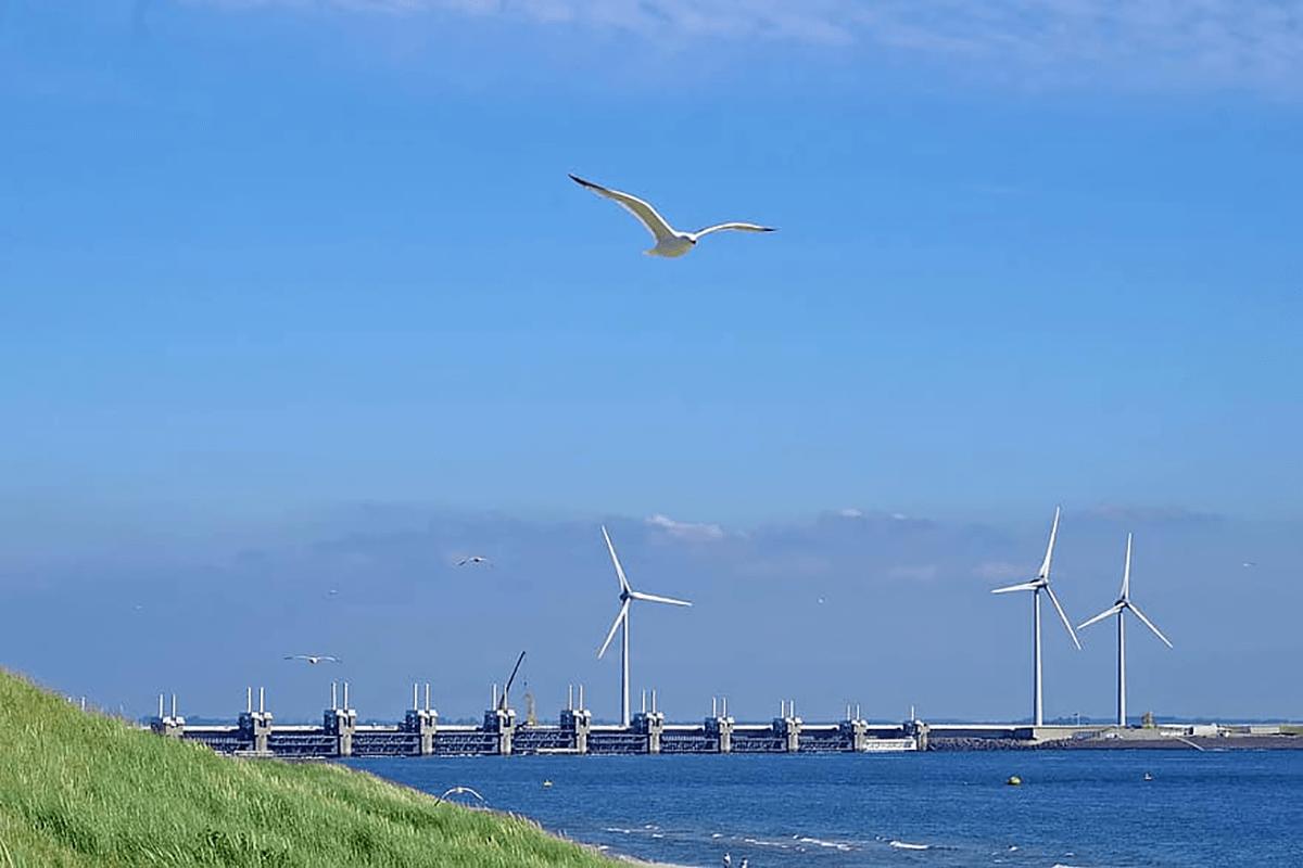 Martılar, Küçük Ölçekli Rüzgar Türbinlerinin Kanadına İlham Verdi